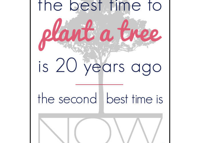 A Fresh Start: The Best Time to Plant a Tree – Free Printable