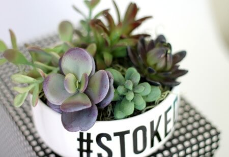 http://persialou.com/wp-content/uploads/2015/08/simple-succulent-planter-3-450x309.jpg