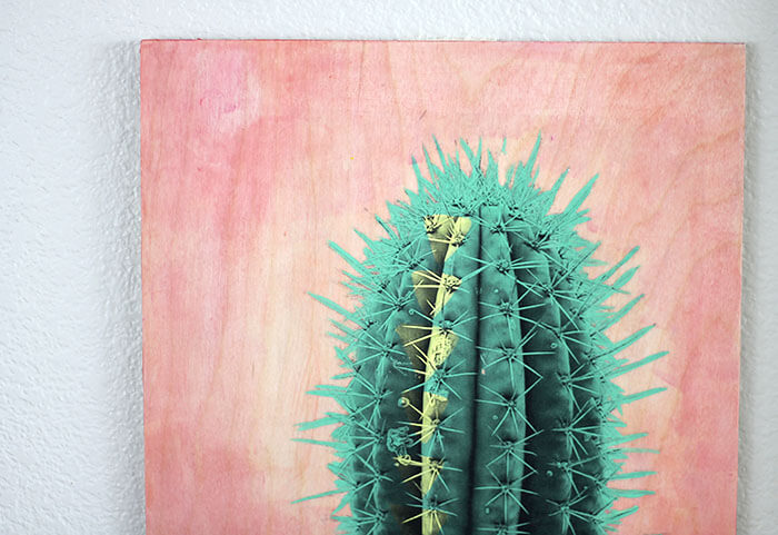 make your own photo transfer art - cactus on a pink background