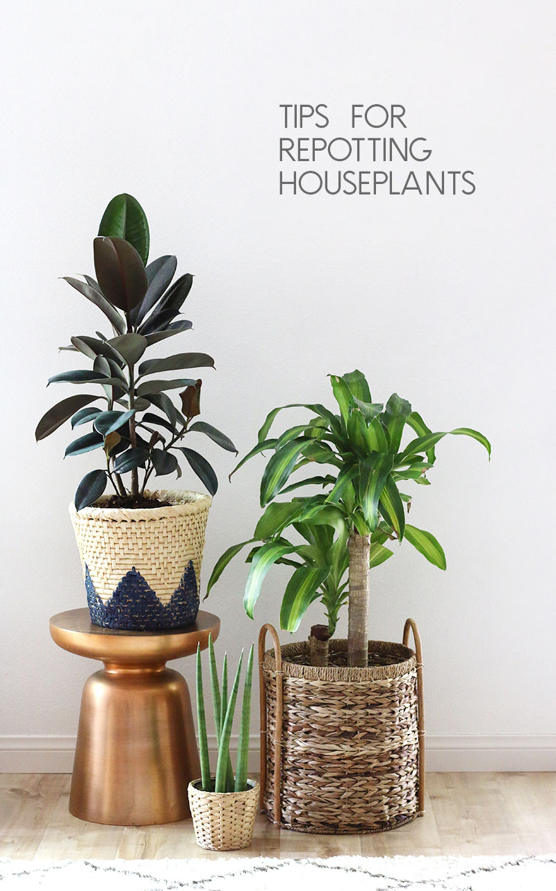 how to repot houseplants - tips for repotting houseplants