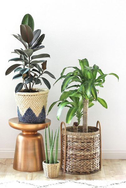 http://persialou.com/wp-content/uploads/2017/05/houseplants2-404x600.jpg